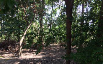 鎮守の森に足を踏み入れる