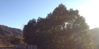 日光が綺麗に見えました(記事の内容とは関係ありません)