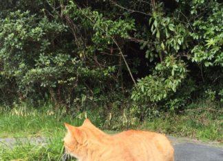日にあたる猫
