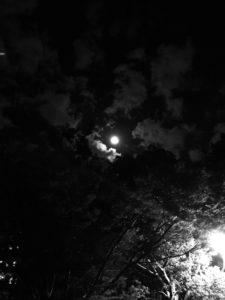 昨日が満月